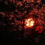 Sunset through the Mopaneveld at Sirheni Bush Camp, Kruger National Park