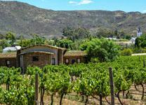 Barrydale Vineyard and interesting homestead