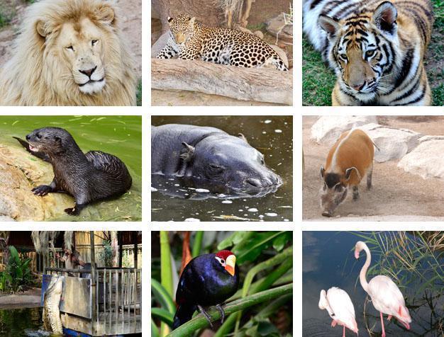 Cango Wildlife Ranch Collage