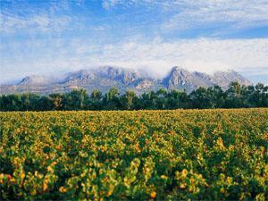 Constantia Uitsig Wine Estate, Constantia, Cape Town