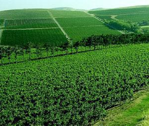Durbanville Hills Wine Estate, Cape Town