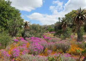 Karoo Desert National Botanical Gardens