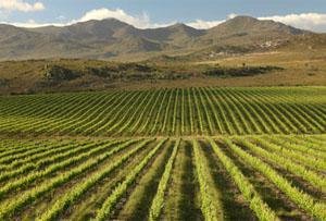 La Motte Wine Estate, Franschhoek, Western Cape