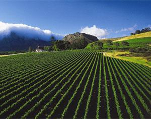Mont Rochelle Hotel and Vineyards, Franschhoek, Western Cape