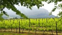 Stellenbosch Wine Route, Cape Winelands