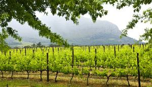 Winelands of the Western Cape