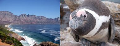 Stony Point Penguin Colony