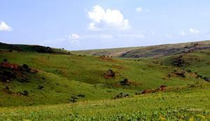 osrand Nature Reserve, Southern Gauteng
