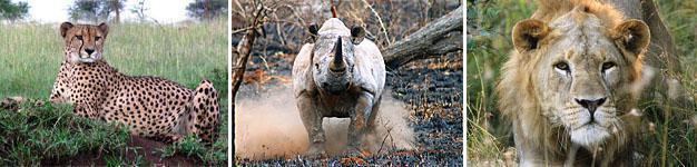 Zululand Rhino Reserve, KwaZulu-Natal