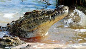 iSimangaliso Wetland Park, St Lucia, KwaZulu-Natal