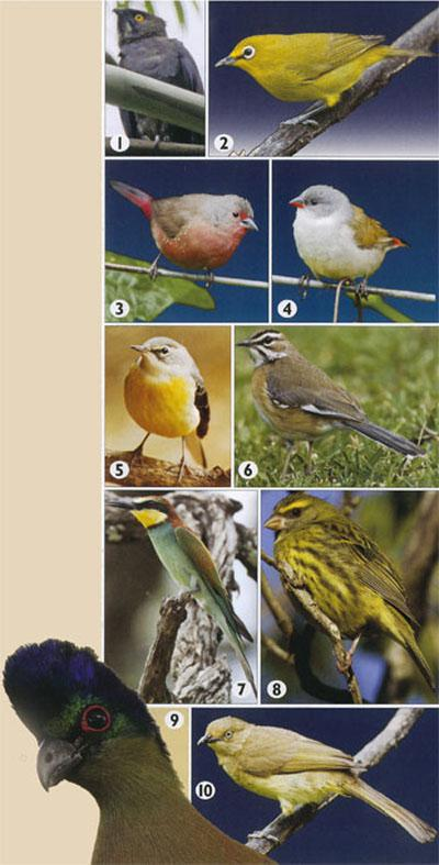10 specials to try to spot on Birdlife South Africa's Magoebaskloof Birding Route.