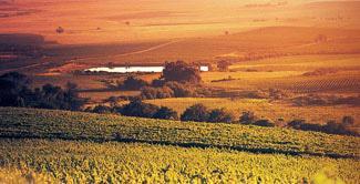 Allesverloren Wine Estate, Swartland Wine Route