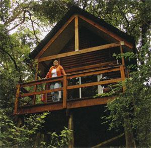Beautiful Forest Lodge Cabin at Kurisa Moya.