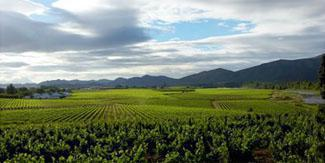 Robertson Wine Route, Breede River Valley, Western Cape