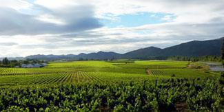 Bon Courage Wine Estate, Robertson, Western Cape