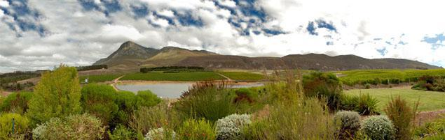 Hermanus Wine Route, Overberg, Western Cape