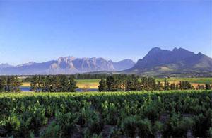 Landskroon Wine Estate