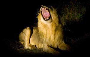 Makalali Private Game Reserve, Limpopo