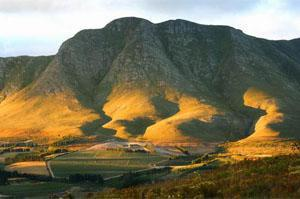 Newton Johnson Wine, Hermanus, Western Cape