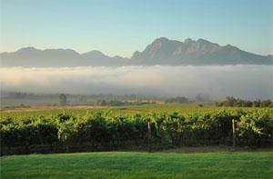 Paarl Wine Route, Cape Winelands