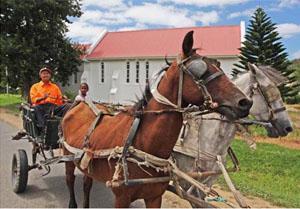 Suurbraak Donkey Cart