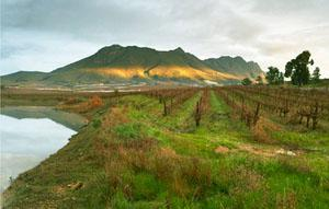 Swartland Wine Route, Western Cape
