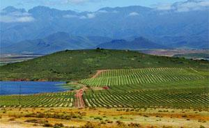 Zandfliet Wine Estate, Robertson Wine Route, Western Cape