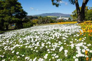 Caledon Wildflower Gardens in September, Cape Overberg