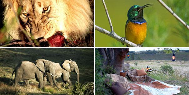 Gondwana Game Reserve Activities