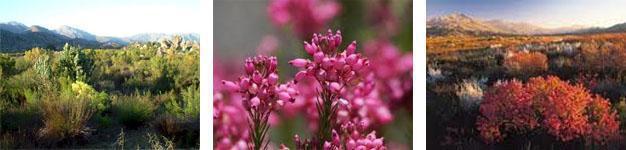 Groot Winterhoek Flora