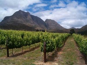 Herold Wines, Karoo Kannaland Wine Route, Garden Route