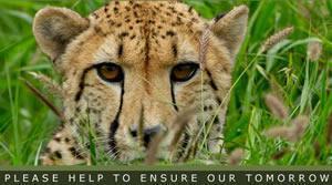 Hoedspruit Endangered Species Centre, Hoedspruit, Limpopo