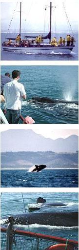 Romonza Boat Trips