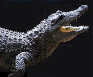 Addo Raptor and Reptile Centre, Addo, Eastern Cape