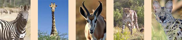 Lalibela Animals