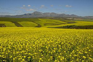 Riversdale, Garden Route, Western Cape