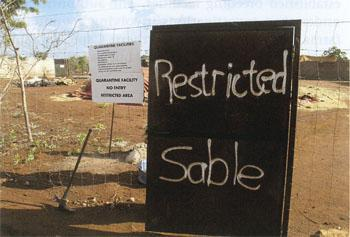The Sable enclosure at Lusaka Park. The sacking-encased pen marked 'Hospital' is in the background, on the left
