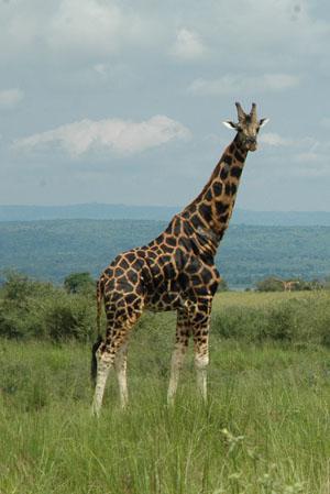 Tsolwana Game Reserve, Eastern Cape