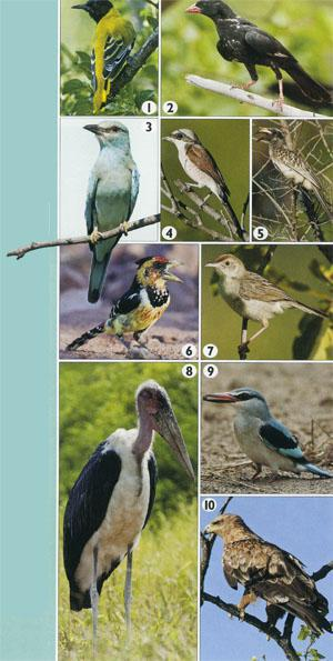 10 Specials to try to spot on Punda maria Birding Route