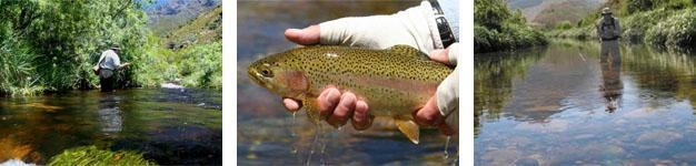 Dwarsberg Fly Fishing Rawsonville
