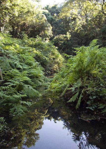 Khologha Indigenous Forests, Stutterheim, Eastern Cape