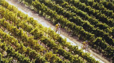 The finish of the Absa Cape Epic is a big day in the lives of the participants and their families, but also an opportunity for less ambitious runners and cyclists to enjoy the trails of the Lourensford Estate.