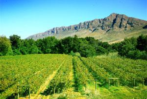 Tulbagh Wine Route, Western Cape