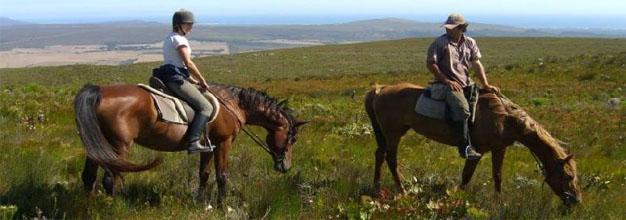 African Horse Company, Gansbaai Mountain Horse Trails