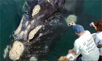 De Kelders Boat Based Whale Watching