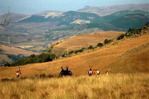Five Assegais Estate - Five Assegais Hiking Trail, Mpumalanga, South Africa