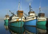 Gansbaai Harbour
