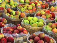Grabouw Apple Industry
