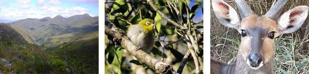 Grootvadersbosch Nature Reserve Birding