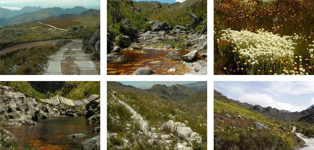 Hottentots Holland Nature Reserve, Overberg